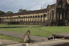 Affe, der vor Angkor Wat Tempel sitzt und schaut Lizenzfreie Stockfotos