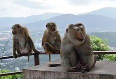 Affe in der Waldbloßen Stadt in Thailand Lizenzfreies Stockfoto