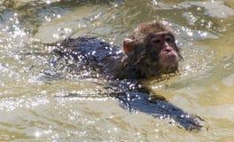 Affe, der weg abkühlt Stockbild