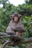 Affe, der wie eine kluge alte Person sitzt Lizenzfreie Stockfotos