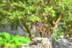 Affe der wild lebenden Tiere in der grünen Natur Stockfotos