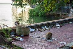 Affe der wild lebenden Tiere, der Lebensmittel isst Lizenzfreie Stockfotografie