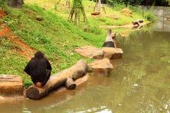 Affe, der zurück im Wald sitzt Stockbilder