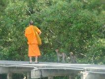Affe des buddhistischen Mönchs und der Mangrove Lizenzfreie Stockbilder