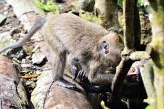 Affe des langen Schwanzes allein war Spiel mit Kind Lizenzfreies Stockbild