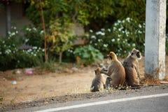 Affe drei auf der Seite der Straße Lizenzfreie Stockfotografie
