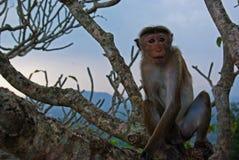 Affe in einem Baum Stockfoto