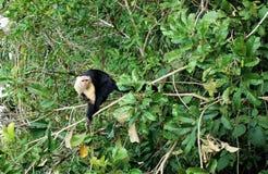 Affe in einem Baum Lizenzfreie Stockfotografie