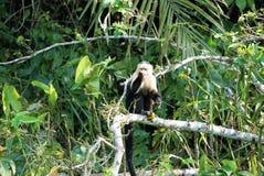 Affe in einem Baum Stockfotos