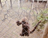 Affe in einem Gef?ngnis stockfoto