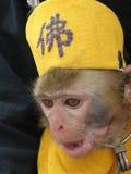 Affe in einem herrlichen Kleid Lizenzfreies Stockfoto