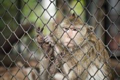 Affe in einem Käfig Lizenzfreie Stockbilder