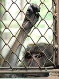 Affe in einem Käfig Stockfotografie