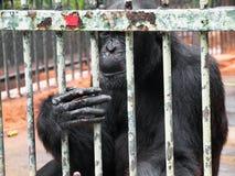Affe in einem Käfig Stockfoto