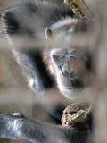Affe in einem Käfig Lizenzfreie Stockfotos