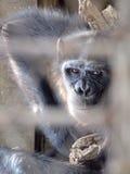 Affe in einem Käfig Stockbild