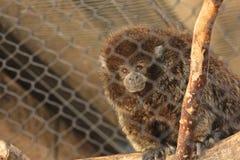 Affe in einem Käfig Stockfotos