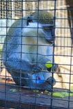 Affe in einem Käfig Lizenzfreies Stockfoto