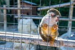 Affe in einem Käfig an einem Zoo Stockbilder
