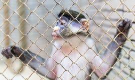 Affe in einem Käfig in einem Zoo Stockbilder
