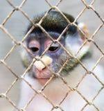 Affe in einem Käfig in einem Zoo Stockbild