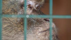 Affe in einem Käfig hinter Gittern Gefühl der Traurigkeit, Verzweiflung, Krise Ein Tier in der Gefangenschaft Trauriger Blick Stockfotografie