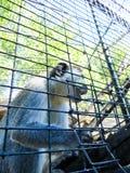 Affe in einem Käfig am Zoo Lizenzfreie Stockfotografie