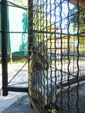 Affe in einem Käfig am Zoo Stockfotografie