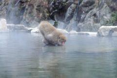 Affe in einem natürlichen onsen (heiße Quelle) Lizenzfreie Stockfotografie