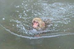 Affe in einem natürlichen onsen (heiße Quelle) Stockbild