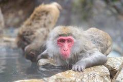 Affe in einem natürlichen onsen (heiße Quelle) Stockfoto