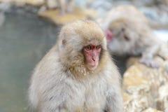 Affe in einem natürlichen onsen (heiße Quelle) Lizenzfreies Stockbild