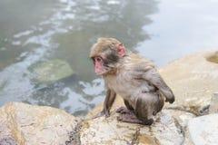 Affe in einem natürlichen onsen (heiße Quelle) Lizenzfreie Stockbilder