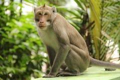 Affe in einem Park Lizenzfreies Stockbild