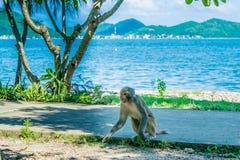 Affe an einem Seeufer Stockfotos
