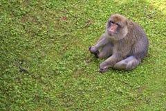 Affe in einer Reinigung Lizenzfreies Stockfoto