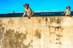 Affe in einer Stadt Lizenzfreie Stockbilder