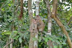 Affe entspannen sich auf Baum Lizenzfreie Stockfotos