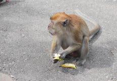 Affe essen Bananennatur in Thailand Lizenzfreie Stockfotografie