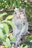 Affe essen Blume Lizenzfreie Stockfotos