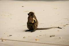 Affe essen die glückliche Banane sehr. Stockbilder