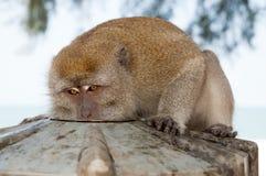 Affe essen von der Platte Primas sitzen im Freien Nettes Tier Affetag Wilde Natur und wild lebende Tiere zoo Stockfotografie