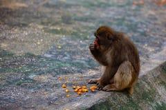 Affe, essend Stockbilder
