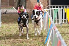 Affe-Fahrhunde bei Georgia State Fair Lizenzfreies Stockfoto