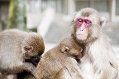 Affe-Familie Stockfotos