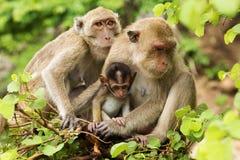 Affe-Familie Lizenzfreie Stockbilder