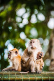 Affe-Familie Lizenzfreie Stockfotografie