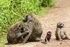 Affe-Familie Lizenzfreie Stockfotos