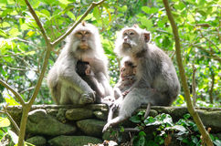 Affe-Familie im Wald Lizenzfreie Stockfotos