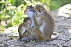 Affe-Familie | Lustige wild lebende Tiere | ein kleines Baby stockfotografie